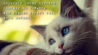Горюют ли кошки? Кошачья депрессия от потери друга или хозяина