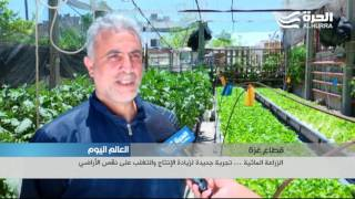 غزة: الزراعة المائية ... تجربة جديدة لزيادة الإنتاج والتغلب على نقص الأراضي