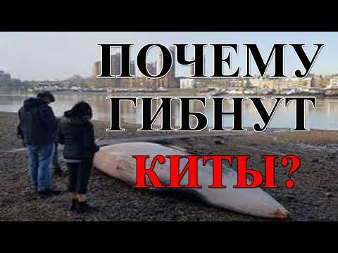 Вопрос: Как гидролокаторы влияют на китов?