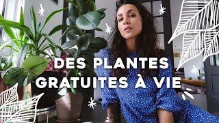 Viens on fait de boutures et on a des plantes gratuites (basilic, plantes grasses…) 🌱
