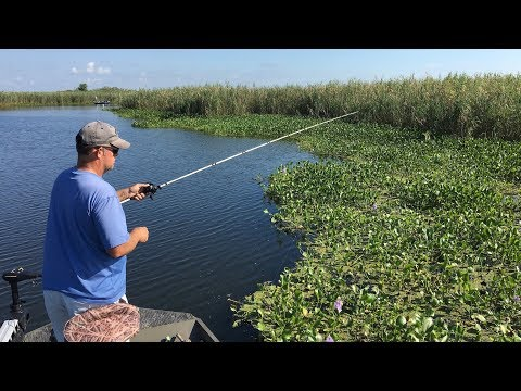 Punching Bass And Redfish In The Face -- Seriously!