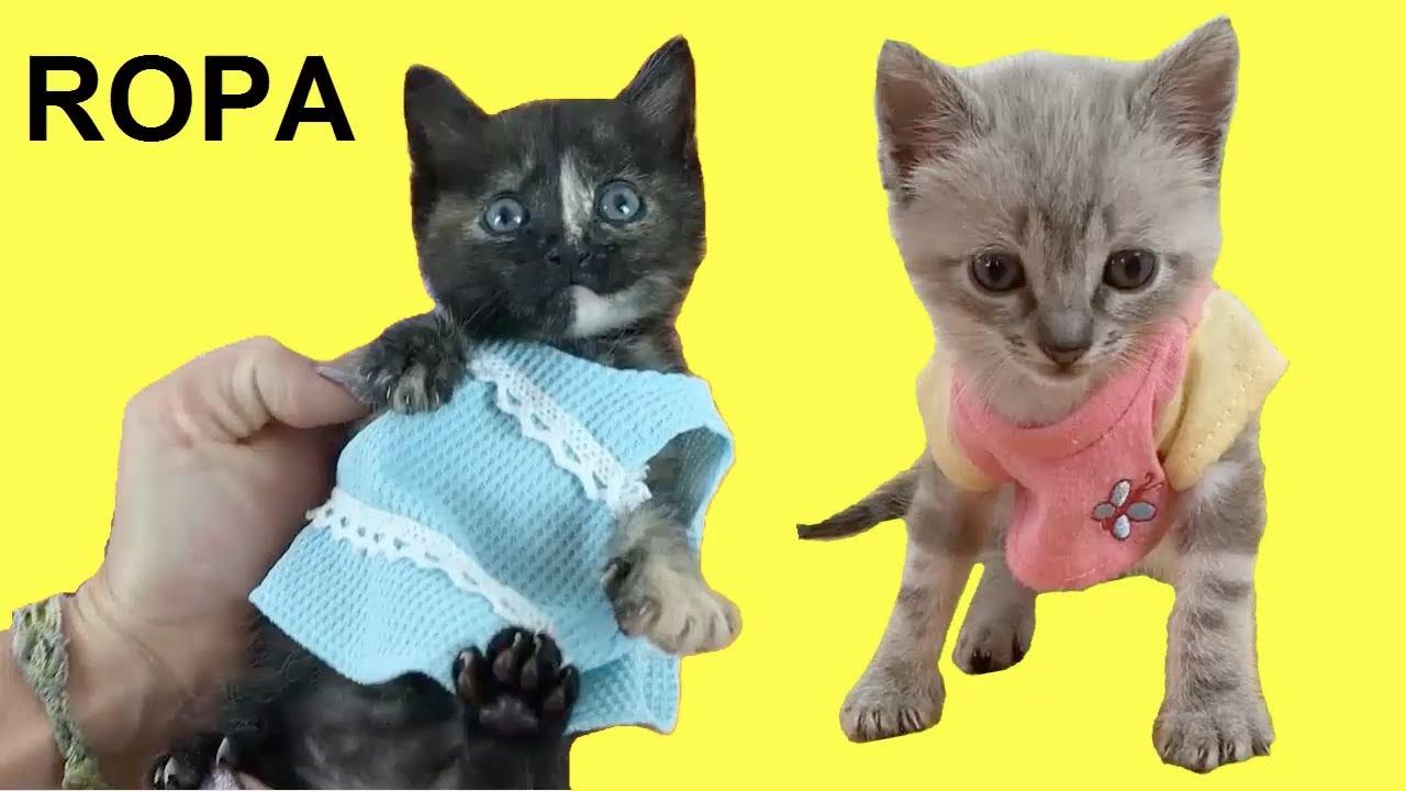 Gatos Luna y Estrella reaccionando a la nueva ropa de las gatitas / Videos de gatitos