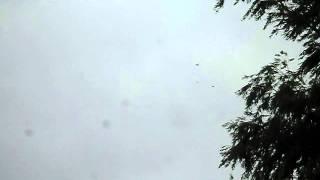 андижанские игровые голуби. молодёжь(, 2011-11-14T22:54:00.000Z)