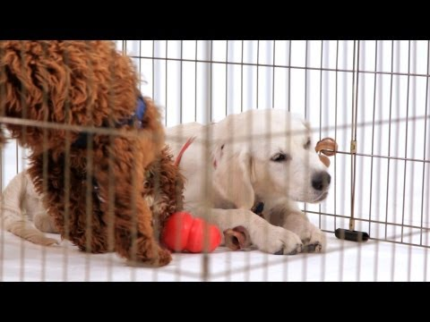 how-to-crate-train-your-puppy-|-puppy-care