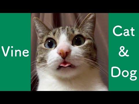 面白可愛い猫と犬の動画集
