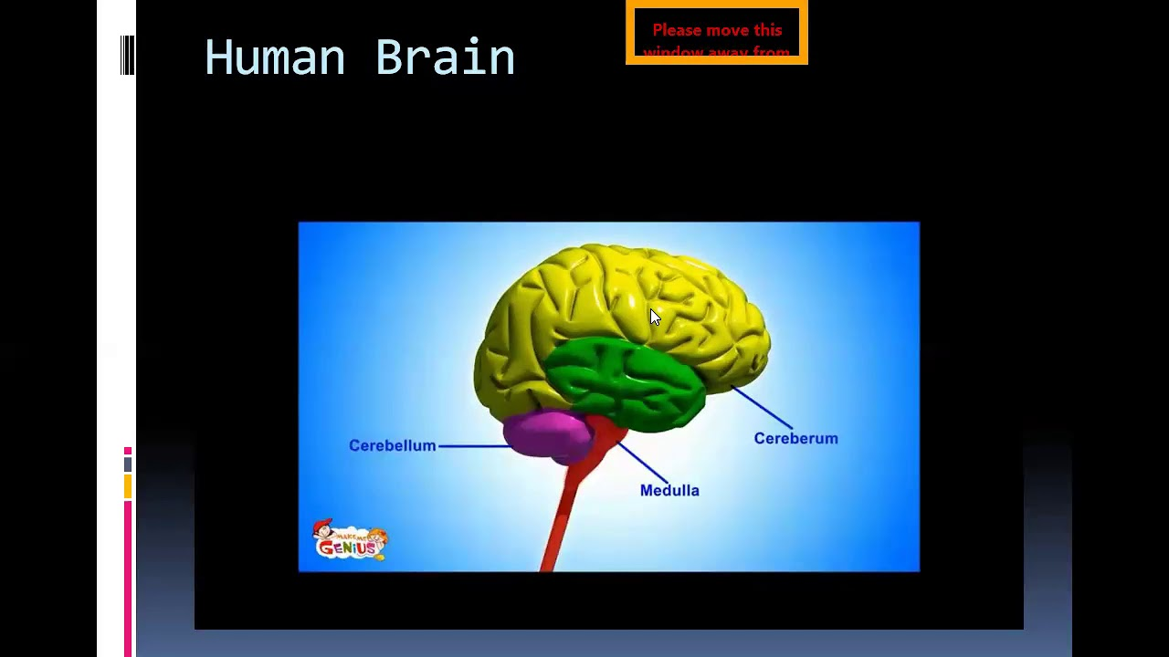 brain and nerve class 5 lecture 3 ,24 /6/ 20 - YouTube