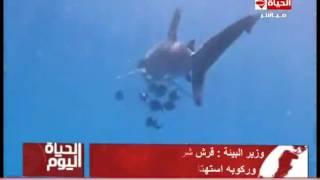 شاهد.. وزير البيئة عن مداعبة مصريين لقرش البحر: