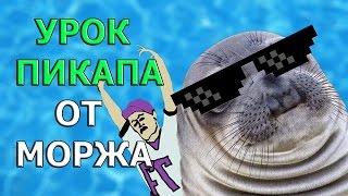 ТОПЧИК - МОРЖ ПИКАПЕР