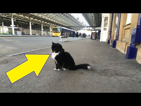 this-little-cat-found-shelter-in-a-train-station.-5-years-later?-she-got-the-purr-fect-promotion