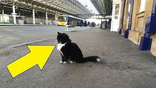 This Little Cat Found Shelter In A Train Station. 5 Years Later? She Got The Purr-fect Promotion