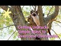Getting Unstuck: Simple Ways to Overcome Overwhelm (improved audio)
