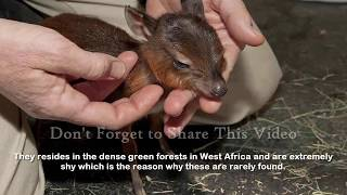 Repeat youtube video Top 17 Smallest Animals In The World