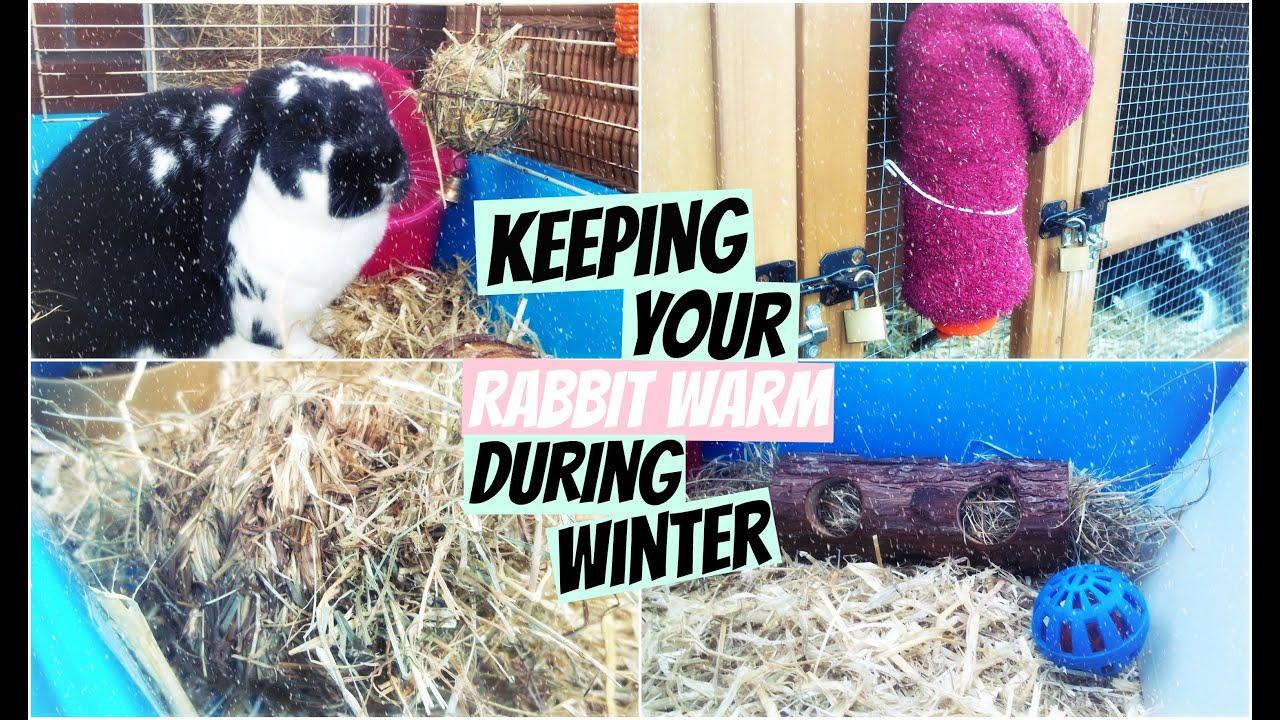 Keeping Your Rabbit Warm During Winter Rosiebunneh Youtube