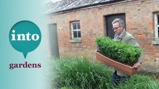 Gardening At Blackpitts: Planting A Box Hedge