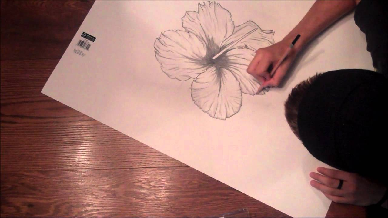 the hibiscus flower a drawing youtube