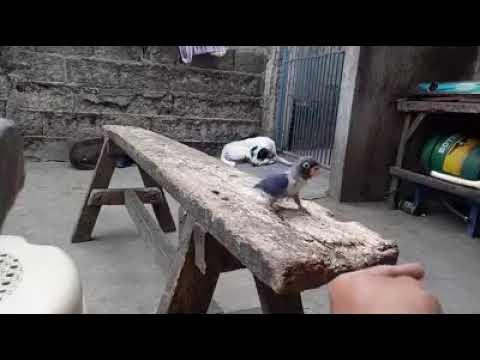 Cat catches bird