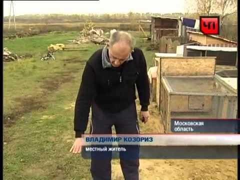 Чупакабра в Петровском.Реальное фото.