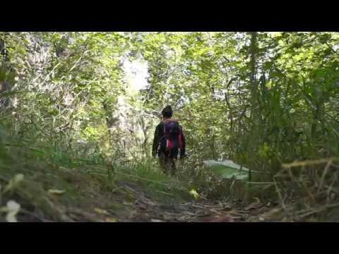 Top Hiking Trails in Utah's Wasatch Range