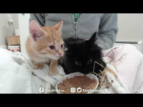 Intake with super floofy feral kitten - TinyKittens.com