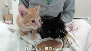 intake-with-super-floofy-feral-kitten-tinykittens-com