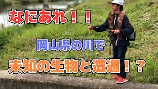 6月はじめ頃、お母さんが岡山県に行くというので、これは岡山で釣りがで...
