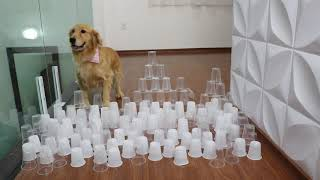 Cup Obstacle Challenge CAT vs DOG
