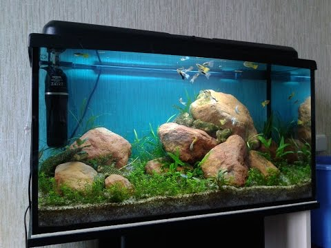 Оформление и дизайн аквариума