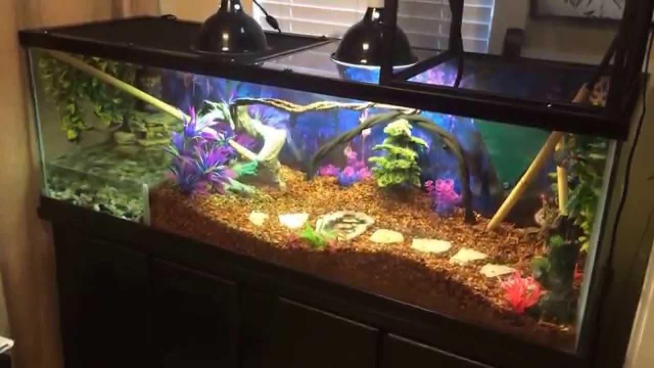 Chinese Water Dragon Terrarium Setup Youtube