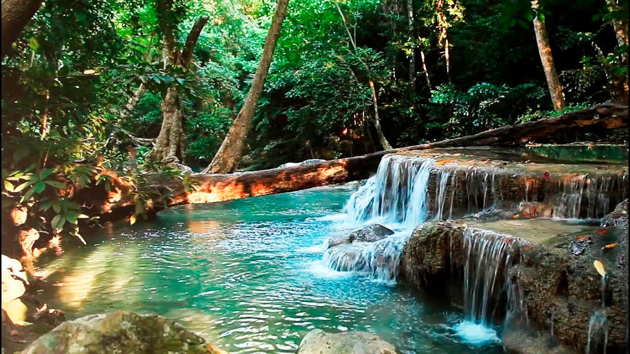 Rainforest Sounds Water Sound Nature Meditation YouTube