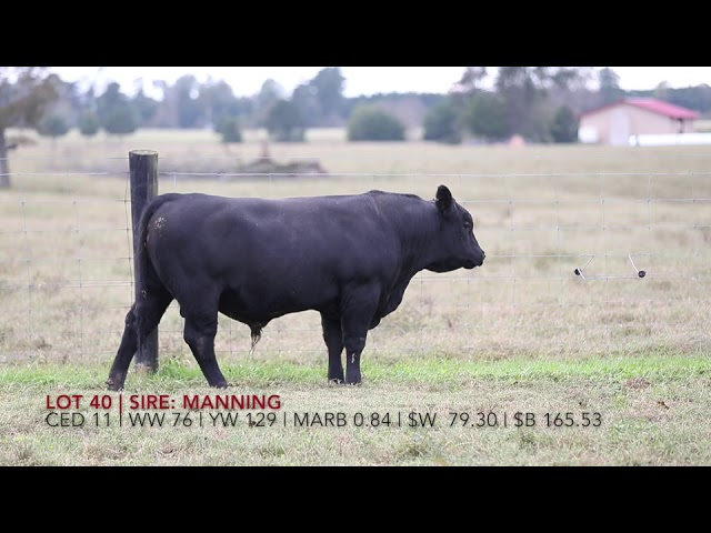 Edgewood Angus Lot 40