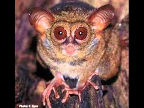 Fauna of Indonesia ( Mammals, Primates, Insecta )