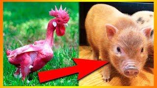 søde dyr videoer