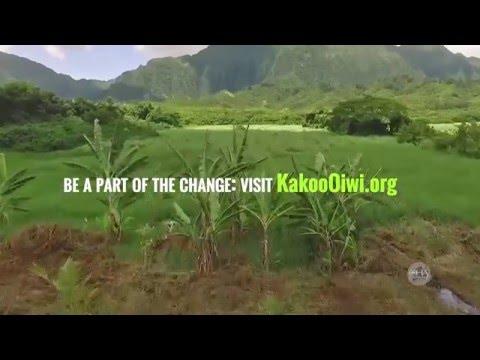 Kākoʻo ʻŌiwi: Cultivating ʻāina and people
