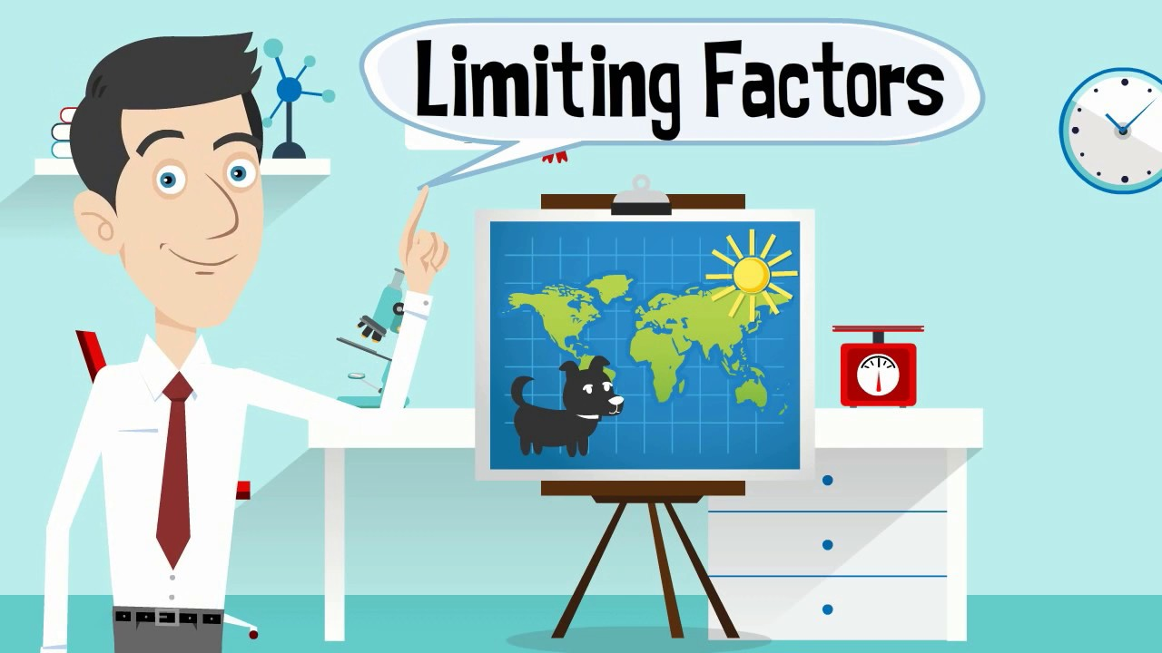 Limiting Factors In An Ecosystem Youtube
