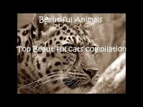 Beautiful Animals - Top beautiful cats compilation