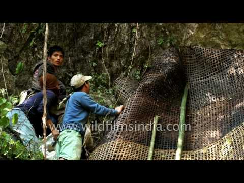 Bat Killing festival of Arunachal Pradesh