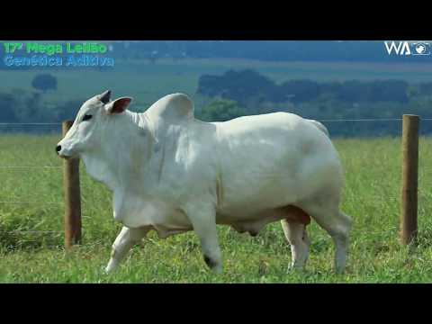LOTE 30 - REM 10342 - 17º Mega Leilão Genética Aditiva 2020
