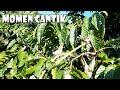 Burung Prenjak Meloloh Anaknya Di Alam Liar  Mp3 - Mp4 Download