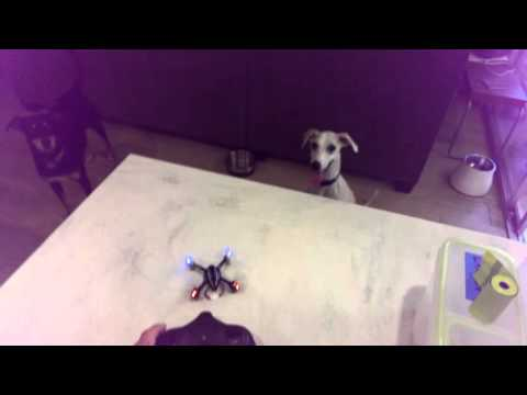 test flight fail with puppy assist