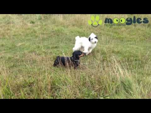 DOG WALKERS WINCHESTER - When Flossy Met Basil