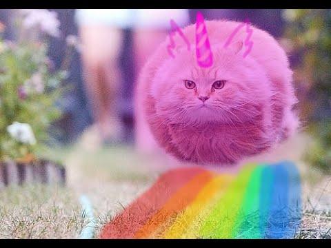 pink fluffy unicorn prank w creativecoco