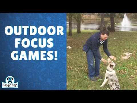 How To Train Your Dog To Focus on You Outdoors