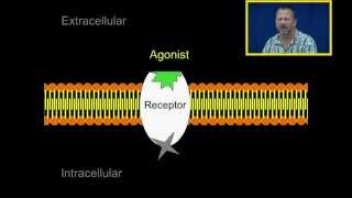 Agonist and Antagonists