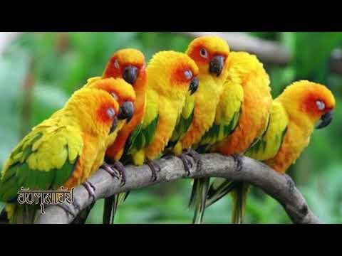 8 นกสวยงาม น่าเลี้ยง ฉลาด แสนรู้ น่าเอ็นดู