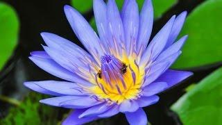 3 Hour Zen Meditation Music: Chakra Balance, Healing Music, Relaxing Music, Soothing Music ☯2616