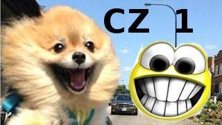Śmieszne Psy - najlepsze z najnowszych (1)