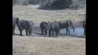 Słonie - zwierzęta Afryki