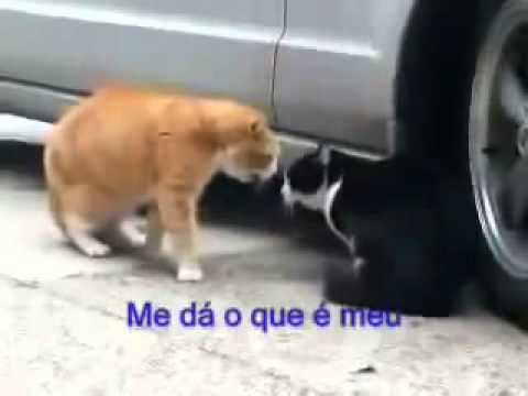 Download Briga de gatos pedro me d meu chip