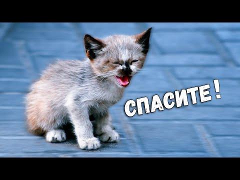 Спасение животных - 10 шокирующих историй, которые вас удивят / SANI Vlog