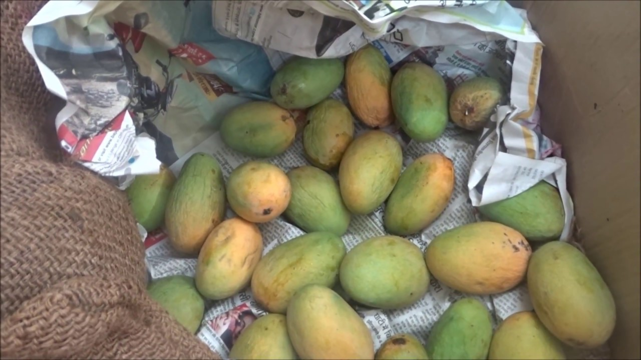 How to Ripen Mangoes forecast